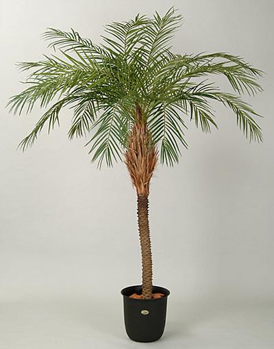 人工樹木ニューフェニックス